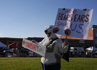 Kelley Garrett (in a polar bear mask) holds signs at a National Monuments rally on the Arcata Plaza, December 2017. Photo: Sarah Duffy.