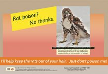 Rodenticide poster by Bird Ally X/Humboldt Wildlife Care Center