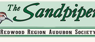 Audubon Sandpiper header graphic
