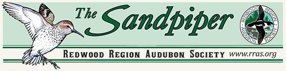 Audubon Sandpiper header graphic