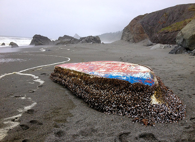 A Japanese skiff from the 2011 Tōhoku earthquake and tsunami washed ashore on the North Coast covered in barnacles. Photo: NEC.