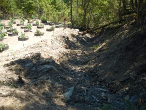Stream Relocated for Grow Site. Photo: NEC