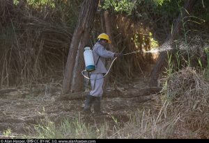 Workers spraying herbicide in a nature reserve. Photo: Alan Harper, Flickr CC