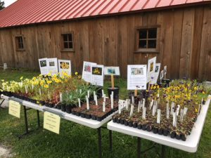CNPS's plant stand at Kneeland Glen Farm Stand.