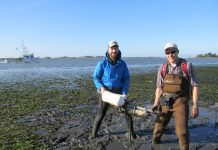 Joe Tyburczy of California Sea Grant Extension and HSU graduate student Eric LeBlanc recently deployed instruments during very low tides to measure pH levels and other environmental conditions in and near eelgrass beds in Humboldt Bay. Credit Brian Carter