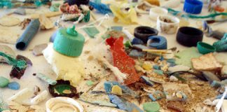 Examples of plastic marine debris. Photo: NOAA Marine Debris Program, Flickr CC.