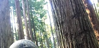 Rob in his natural habitat: a redwood forest. Photo courtesy of Rob DiPerna.