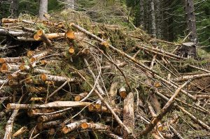"Source material for biomass power plants often comes from leftovers from logging operations, otherwise known as ""slash."" Photo: Oregon Department of Forestry, Flickr CC."