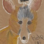 Drawing of a kit fox for the 2017 Endangered Art Show, by Miriam Hohl.