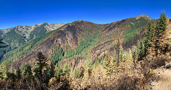 A typical Klamath Mountains forest burn mosaic. Notice that, except for some headwall swales, riparian areas typically burn at low intensity. Photo: Luke Ruediger.