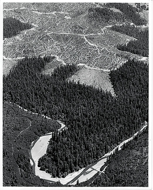 Aerial photo of a clearcut region above Tall Trees Grove that was added to the national park in the Redwoods Expansion Act in 1978. Photo: Dave Van de Mark.
