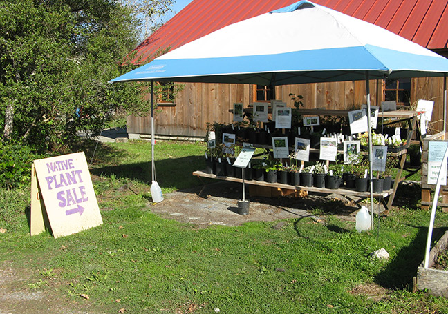 CNPS's has native plants for sale every day, noon-6 p.m., at the Kneeland Glen Farm Stand. Photo: Carol Ralph.
