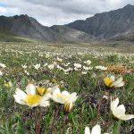 Spring in Arctic Flickr CC Madhav Pai