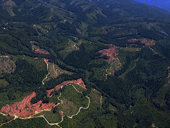 Clearcuts on Green Diamond land adjacent to Redwood National Park. Photo courtesy of Kimberly Baker.
