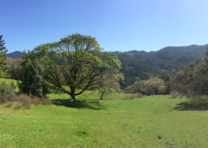 The Hunter Ranch easement in eastern Humboldt County. Below: Photo: courtesy of NRLT.
