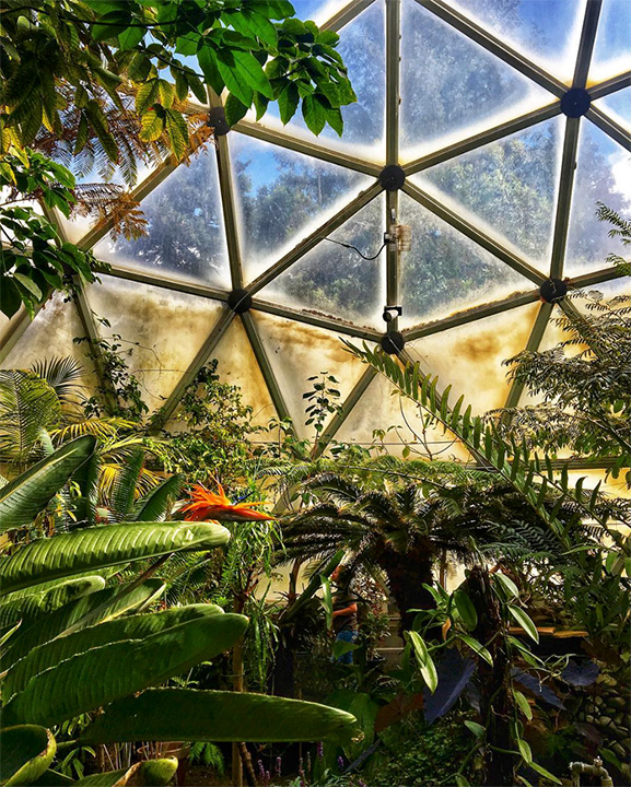 Interior view of the greenhouse dome on the HSU campus. Photo from the Greenhouse Club's Instagram page @hsugreenhouseclub.