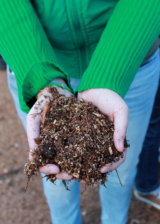 Woody biomass. Photo: Appropedia.