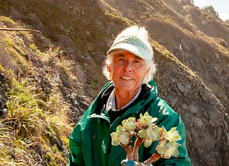 Carol Ralph replanting bluff lettuce (Dudleya farinosa) illegally poached by plant smugglers, April 2018. Photo: Michael Kauffmann.