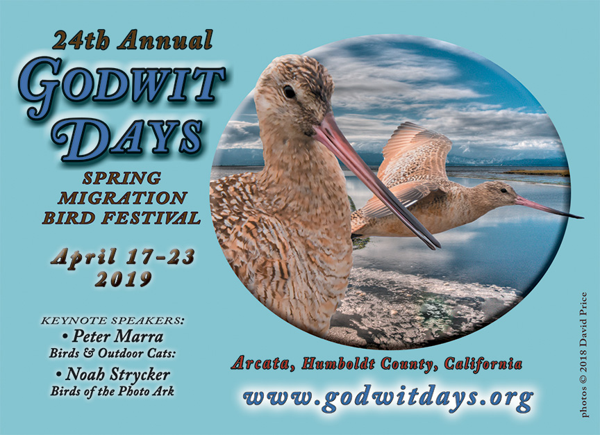 Godwit Days postcard art