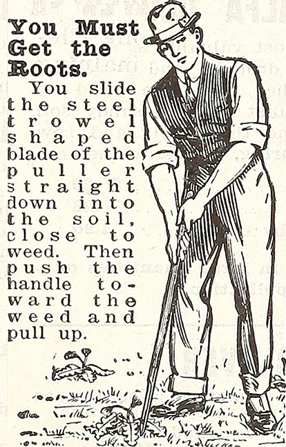 You Must Get the Roots. Vintage illustration from the 1915 Griffith and Turner Co.: Farm and Garden supplies.