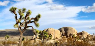 Landscape of Joshua Tree National Park. Photo: Night Owl, CC0.
