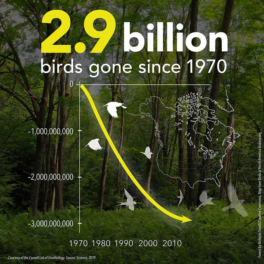 Since 1970, 2.9 billion breeding adult birds have been lost from the United States and Canada, including birds in every ecosystem. Numbers have plummeted even among familiar species. Graph courtesy of the Cornell Lab of Ornithology.