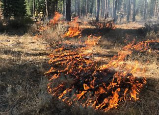 A prescribed burn in the Shasta-Trinity National Forest, October 2018. Photo: Liz Younger, USFS.
