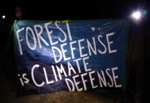 A banner reading Forest Defense is Climate Defense. Photo from Save the Mattole's Ancient Forest Facebook page.