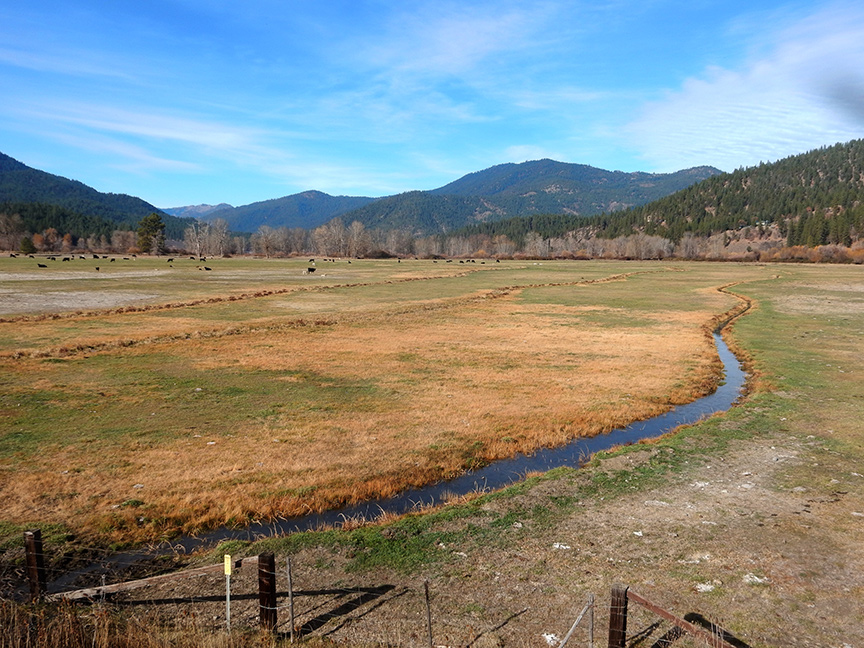 Out-of-season pasture irrigation, Tozier Ranch, Shakleford Creek Watershed, Scott River Valley, November 13, 2019. Photo: Felice Pace.