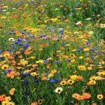 daisies_cornflowers_flowers_meadow_summer_nature_55629_3840x2160